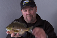 image links to bluegill fishing video