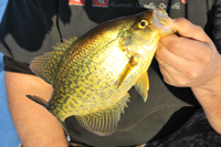image of andy jackson with big crappie