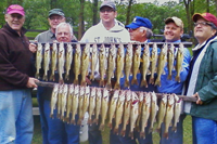 image of 50 walleyes
