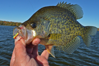 image links to article about crappie fishing