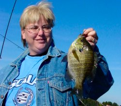 Bluegill Laura Bellin