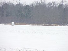 Ice Cover Moose Lake 2003