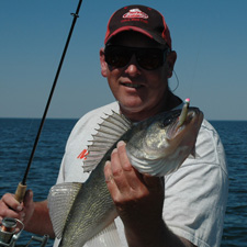 Ripple Shad Walleye