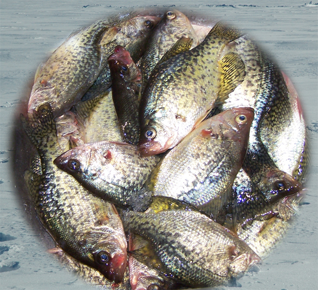 Fishing reports mn minnesota march 2011 for Crappie ice fishing