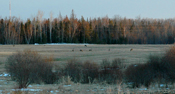 Deer River Deer Herd