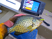 Crappie Fishing Guide Jeff Sundin