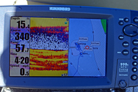 Bluegills On Humminbird Screen