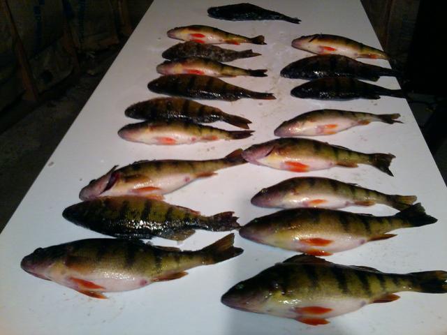 Minnesota Fishing Report MN North Fish Reports Ice