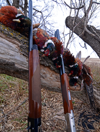 Pheasant Hunting North Dakota