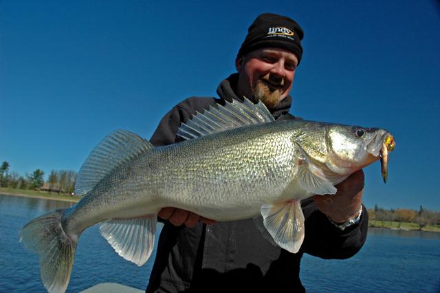 Ice reports minnesota fishing reports april 2012 for Rainy lake fishing report