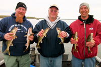 Walleyes caught on Winnibigoshish with fishing guide Nik Dimich