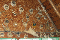 Deer Antlers Collection On Wall