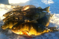 Ball Club Lake Perch