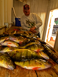 Bag limit of Perch caught by Kyle and Karen Reynolds