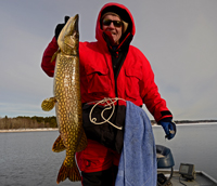 Northern Pike YUM Money Minnow