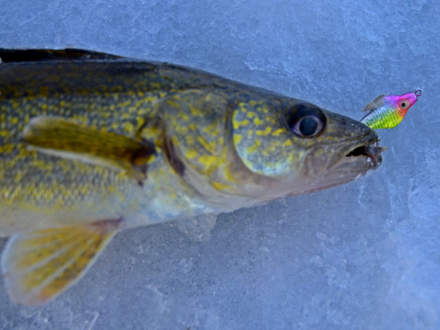 Walleye Fishing Lures