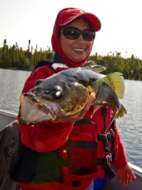 Walleye caught on Lake Kashabowie August 2013