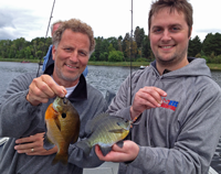 image of Matt and Andrew Higgins with a nice pair of Bluegills