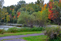 image of fall colors at trout lake