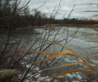 image of ice forming on shoreline of Moose Lake
