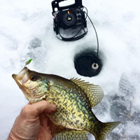 image of Crappie held above the ice hole