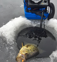 image of crappie on thin ice