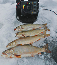 image 4 rainbow trout on the ice