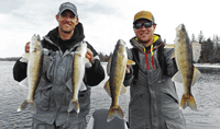 image of Walleyes caught on Rainy River
