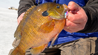 image links to ice fishing article should I saty or should i go?