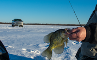 image of ice fisherman bringing crappie up from fishing hole