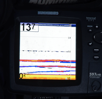 imaage of Sunfish on Humminbird screen