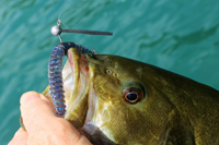 image of plastic bass bait
