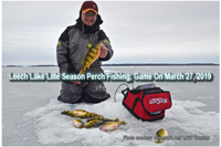 image links to perch fishing report