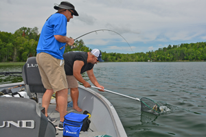 image of anglers catching walleye