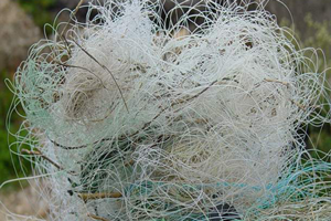 image of fishing line