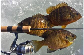 7ac5df5b25d798 Greg Clusiau Fishing Report Minnesota Grand Rapids MN