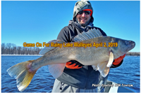 image of rainy river walleye