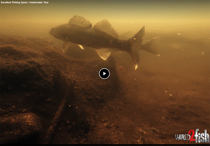 image links to video about fishing near dam tailraces in the Grand Rapids area