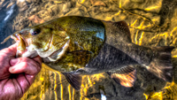 image links to fishing article about smallmouth bass
